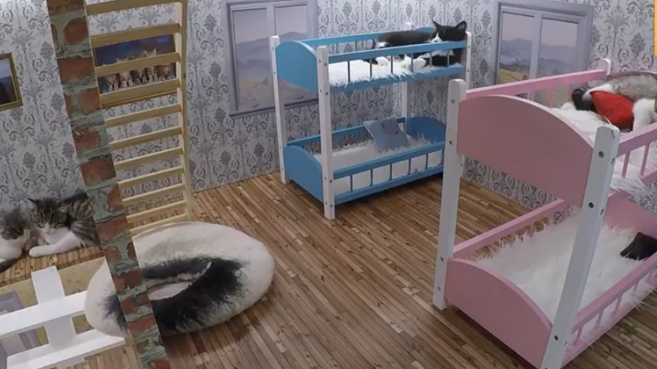 Tiny kitten livestream from tiny house is what you need right meow